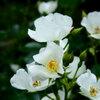 白い花、狂宴の庭