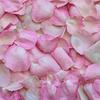 心を落ち着かせるにはピンク色が効果的!風水にも影響します