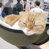 癒しを求めて猫カフェへ★ゴールデンウィークの落とし穴!?
