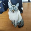 GW第一弾始まりました 北海道函館編 姪のゲロあり猫パンチあり