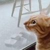 規則正しい猫さんの1日