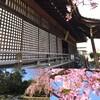 今年の桜はまだ間に合う!京都で混まずに桜を満喫する4つの方法