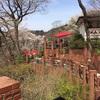 【鎌倉散歩】樹ガーデン〜銭洗弁天〜源氏山公園
