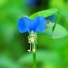 季節の花(令和三年六月3 )