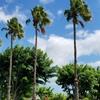 ハワイに対する杜くまの個人的な考え