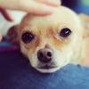 【疲労回復】犬派も猫派も!とにかく癒される動画をかき集めたよ【YouTube】