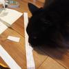 雑なスパイスラックを作ってみる(3) 壁紙を貼ってみよう
