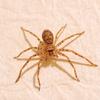 室内にいた蜘蛛