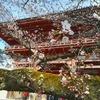 秀吉が愛でた桜を、当時に思いを馳せ今なお楽しめる『醍醐寺』【2019年・京の桜】