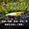 スノーホワイトビーシュリンプ繁殖・交配・混泳・飼育を詳しく解説!