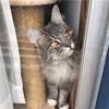 【最強不動産営業マンが教える簡単猫の毛対処法!】