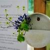 生け花の展覧会