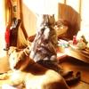 老猫と仔犬は日向ぼっこで軒の下