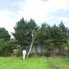 伐採した木の使い方 ~ヒノキ(檜)の皮むき~