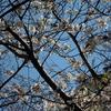 みずほの春