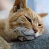 【レビュー】SIGMA 50mm F1.4 DG HSM | Artが猫撮影で万能レンズ【作例たくさん】