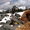 雪の編笠山へ|腹ペコ登山犬モカは今日も行く!