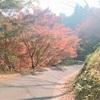 青の交響曲に乗って、吉野へ秋の遠足へ。