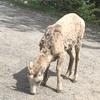 バンフ周辺で出会える動物たち①