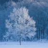 11月12日は「四季」の日~冬を愛する人は?(*´▽`*)~