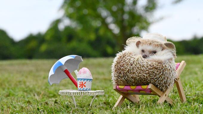 【今日は何の日?】ハリネズミさんが紹介する7月の記念日