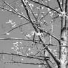 2021年3月20日までに撮影したデジイチとコンデジ写真。ソメイヨシノなど春の花が本格的に咲き始めました