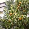 「佐久の季節便り」、午後には「大雨特別警報」、「台風19号」が大荒れ…。