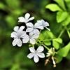季節の花(令和三年八月)