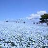 ひたち海浜公園ネモフィラ2019 食べ歩きマップ [グルメ・お土産]