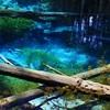 阿寒摩周国立公園「神の子池」