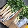 自然農の野菜を流通に乗せる難しさ