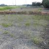 大畑の除草つづき