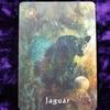 今日のカード Jaguar
