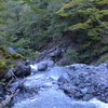 寒露の三嶺独り遊山 ブナの森