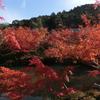 京都で「国宝展」を観る。「縄文のヴィーナス」にも再会。