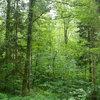 近自然森づくりワークショップに参加してきた