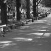 神奈川県庁前の並木通り、人生に役立つかもしれないマッタリするには最高の場所