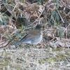 【野鳥】1月の奈良川レポート@奈良山公園&奈良川