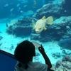 美ら海水族館とステーキハウス88