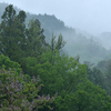 午後から雨