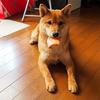 愛犬用おやつランキング【しばおが選ぶ犬用おやつ4選】