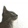 【低アレルゲン】猫アレルギーでも飼いやすい!症状が出にくい猫の品種や特徴を紹介