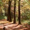 フウ(楓)の紅葉と北摂山系の深山・剣尾山・高岳
