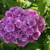花びらが丸めのヤツとか。