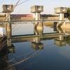 [河川][歴史] 古利根川の追跡(6)−8 中川合流から古隅田川へ