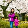嵐山・嵯峨野の桜
