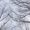 ふと葉の落ちた枝を見て・・・