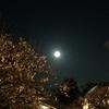 宵の梅 @北野天満宮 -梅苑ライトアップ-