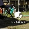 野良猫との縄張り争いに負けるおうちネコは平和ボケかもしれない。お客様ファーストの優しい気持ち。