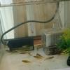 メダカを飼うことになりました―メダカの飼育の最適水温と産卵時期について―